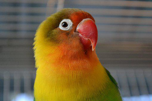 Bird, Pet, Animal, Colorful, Parrot, Beak, Head