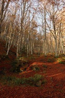 Autumn, Forest, Trees, Leaves, Foliage, Autumn Leaves