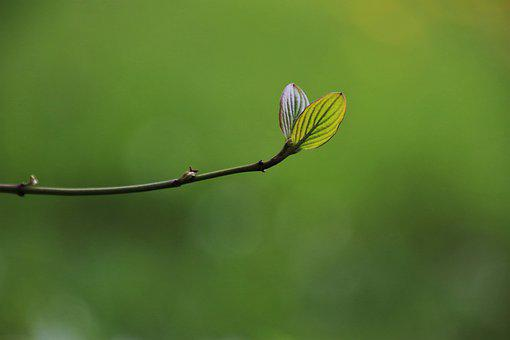 Leaf, Rostock, Growth, Plant, Sprig, Green