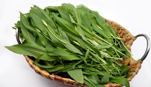Bear's Garlic, Leaves, Basket, Harvest, Vegetable, Herb
