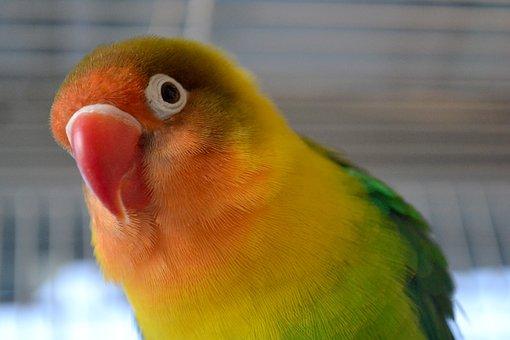 Bird, Pet, Colorful, Parrot, Head, Beak, Portrait, Ave