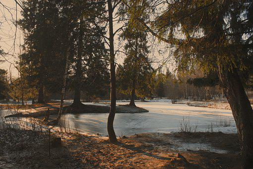 Lake, Frozen, Forest, Winter, Snow, Trees, Woods