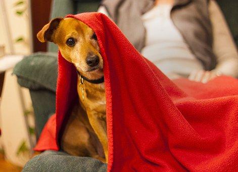 Dog, Puppy, Towel, Animal, Pet, Cute, Portrait, Canine