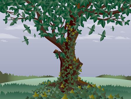 Tree, Old Tree, Birds, Landscape, Ivy, Trunk, Nature