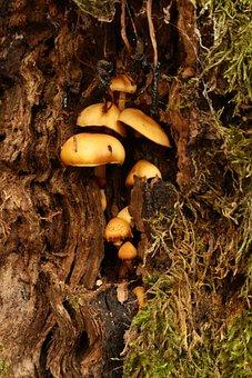 Mushrooms, Tree, Wild Mushrooms, Spore, Sponge, Fungi