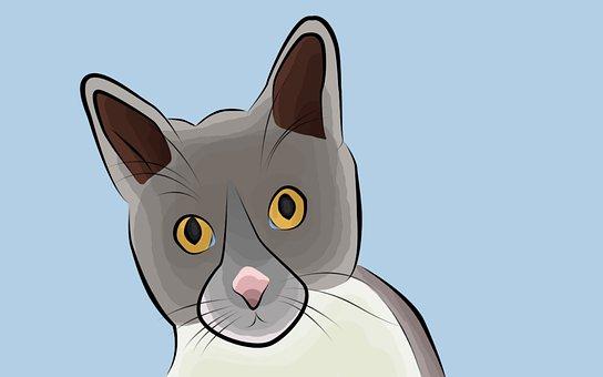 Cat, Animal, Pet, Feline, Domestic Cat, Mammal
