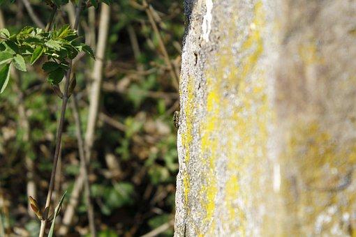 Lizard, Hidden, Reptile, Animal, Nature, Animal World