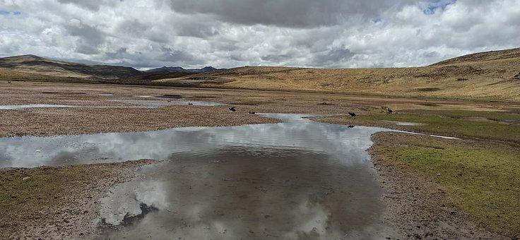 Lagoon, Field, Mountains, Birds, Animals, Reflection