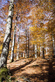 Earth Day, Forest, Autumn, Nature, Woodland, Wood