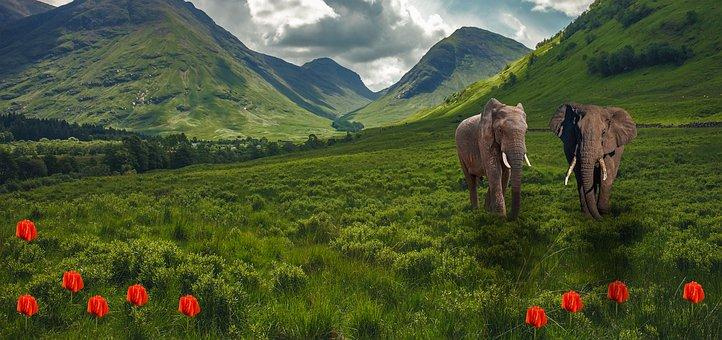Nature, Elephants, Mammal, Prado, Field, Compose