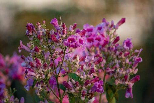 Flower, Rose, Pink, Bloom, Blossom, Love, Petals, Flora