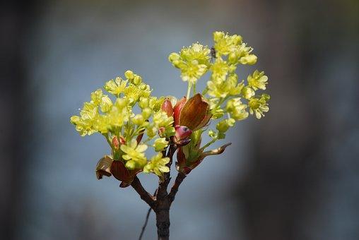 Flowers, Buds, Branch, Bloom, Spring, Spring Awakening