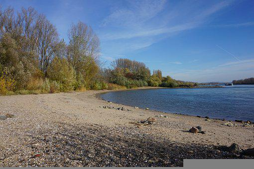 Rhine, River, Bank, Shore, Trees, Forest, Woods