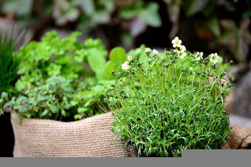 Herbs, Garden Plants, Garden, Herb Garden, Plants