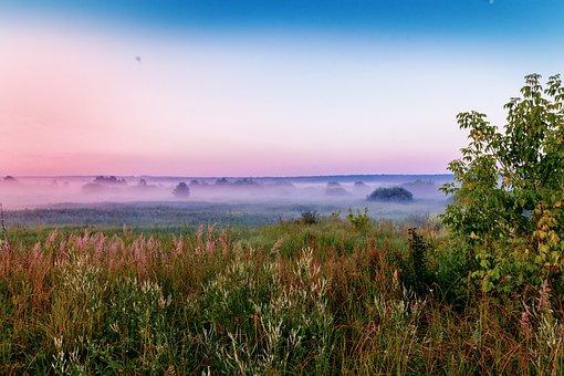 Grass, Fog, Trees, Morning Fog, Foggy, Haze, Mist