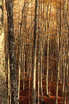 Forest, Trees, Leaves, Earth, Magic, Woods, Landscape