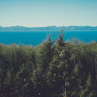 Forest, Trees, Lake, Mountains, Woods, Woodlands