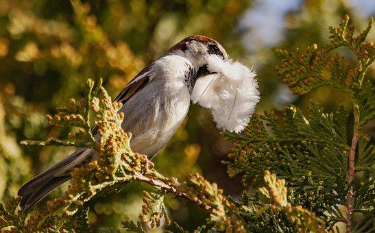 Sparrow, Bird, Branch, Perched, Animal, Wildlife
