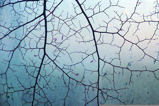 Branches, Tree, Glass, Dew, Dewdrops, Wet, Plant