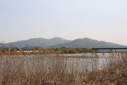River, Reed, Mountains, Bridge, Grass, Plant