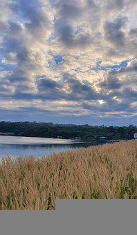 Lake, Reeds, Sky, Clouds, Reedy, Bank, River