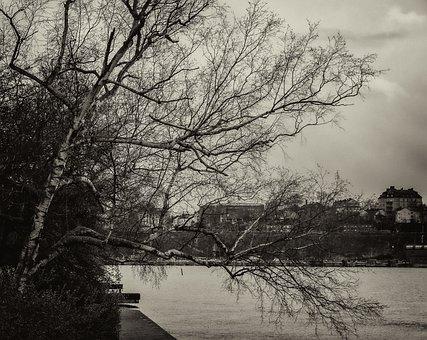 Nature, Landscape, Trees, Sea, Sweden, Stockholm