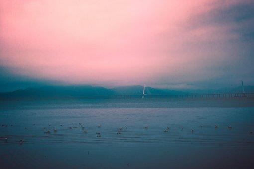 Shenzhen Bay, Beach, Seabirds, The Sea