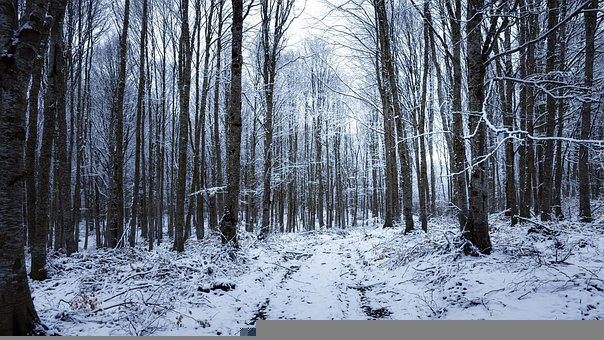 Forest, Trees, Snow, Path, Trail, Winter, Snowy, Frost