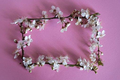 Plum Blossom, Flowers, Frame, Buds, Spring Flowers