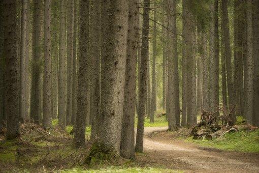 Forest, Trees, Acer Tree, Wood, Trentino Alto Adige