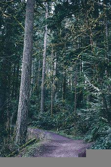 Forest, Pacific North West, Scary, Washington, Oregon