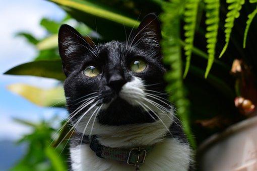 Look, Eyes, Whiskers, Cat, Kitten, Animals, Portrait