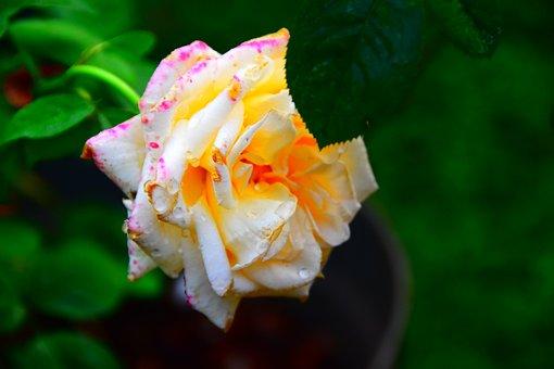 White Mix Pink, Art, Beautiful, Rgb, Drawing, Green