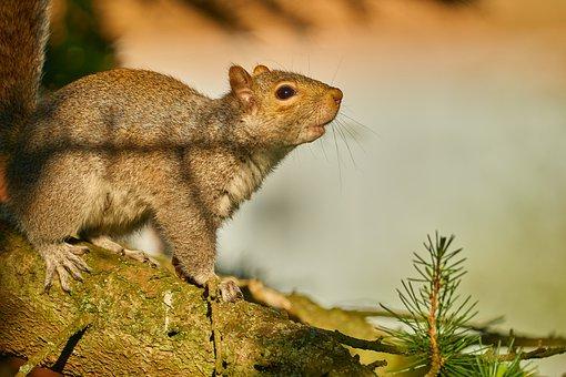 Squirrel, Cute, Animal, Tree, Furry, Wild, Nature