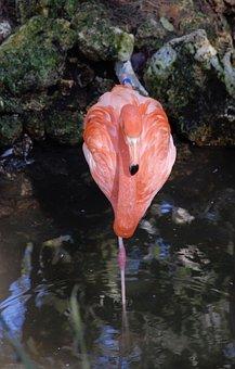 Flamingo, Florida, Pink, Animal, Bird, Summer, Nature