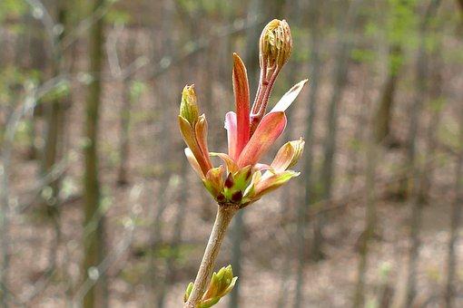 Bud, Spring, Fresh Drive, Blossom, Bloom, Blossom
