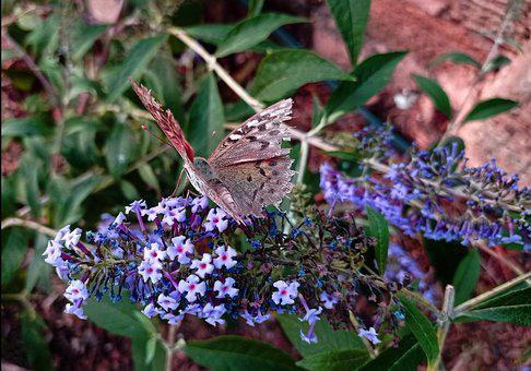 Butterfly, Flower, Insect, Garden, Nature, Summer