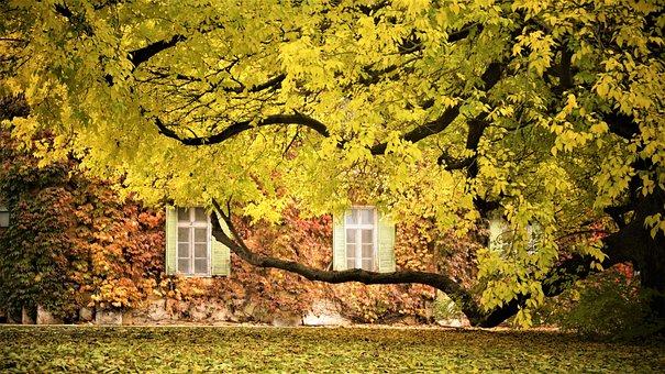 Autumn, Yellow, Nature, Leaves, Color, Foliage
