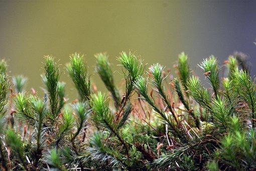 Moss, Green, Forest, Nature, Closeup, Ecology, Nap