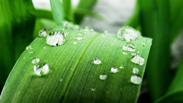 Drop Of Water, Water, Grass, Drip, Raindrop, Droplets