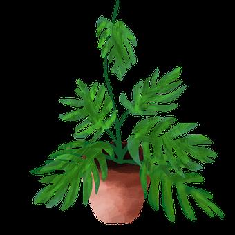 Widow Perforated, Leaf, Plant, Palm, Botanical