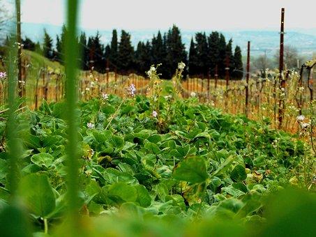 Nature, Plant, Flower, Plants, Flowers, Flora, Leaves