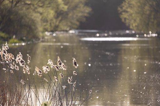 Misty Riverbank, Misty, Mist, Sunrise, Grass, Fog