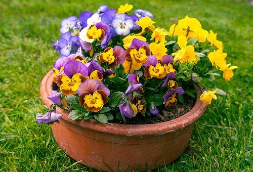 Flowers, Pot, Plant, Potted Plant, Garden, Nature