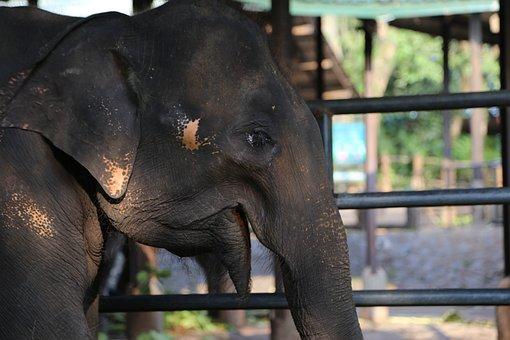 Elephant, Animal, Zoo, Wildlife, Mammal, Nature
