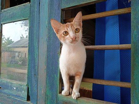 Animals, Pet, Cat, Orange, White, Window