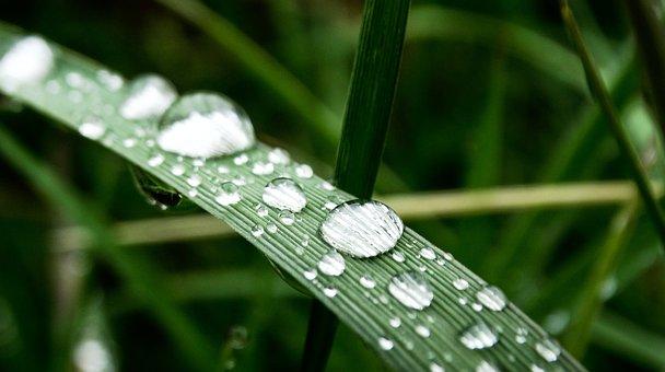Grass, Water, Drop Of Water, Drip, Raindrop, Meadow