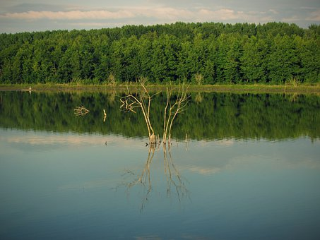Lake, Trees, Reflection, Water, River, Bank, Forest