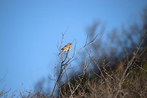 Chickadee, Bird, Branches, Perched, Animal, Small Bird