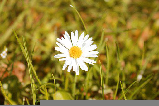 Spring, Joy, Sun, Luck, Nature, April, Rays